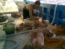 Pescaturismo - Otranto